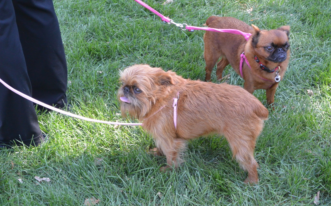 A Play Day for Pets at Dog Days of Summer